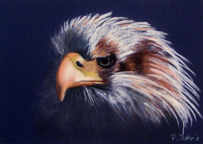Adler, Pastellmalerei, Weißkopfseeadler, Portrait, Vogel, Malerei