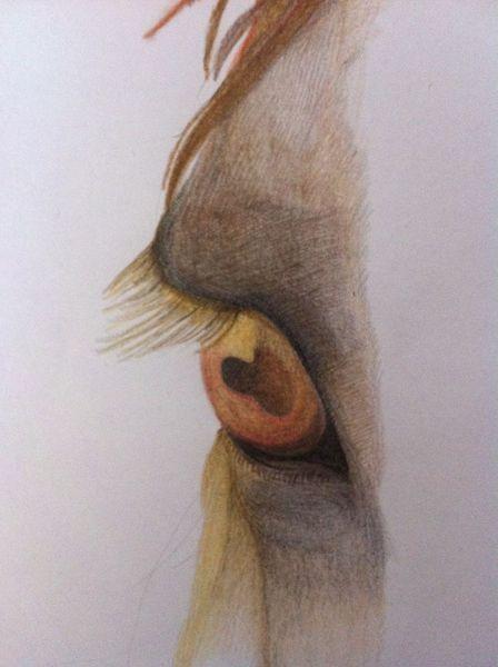 Pferde, Augen, Tiere, Buntstiftzeichnung, Natur, Zeichnungen
