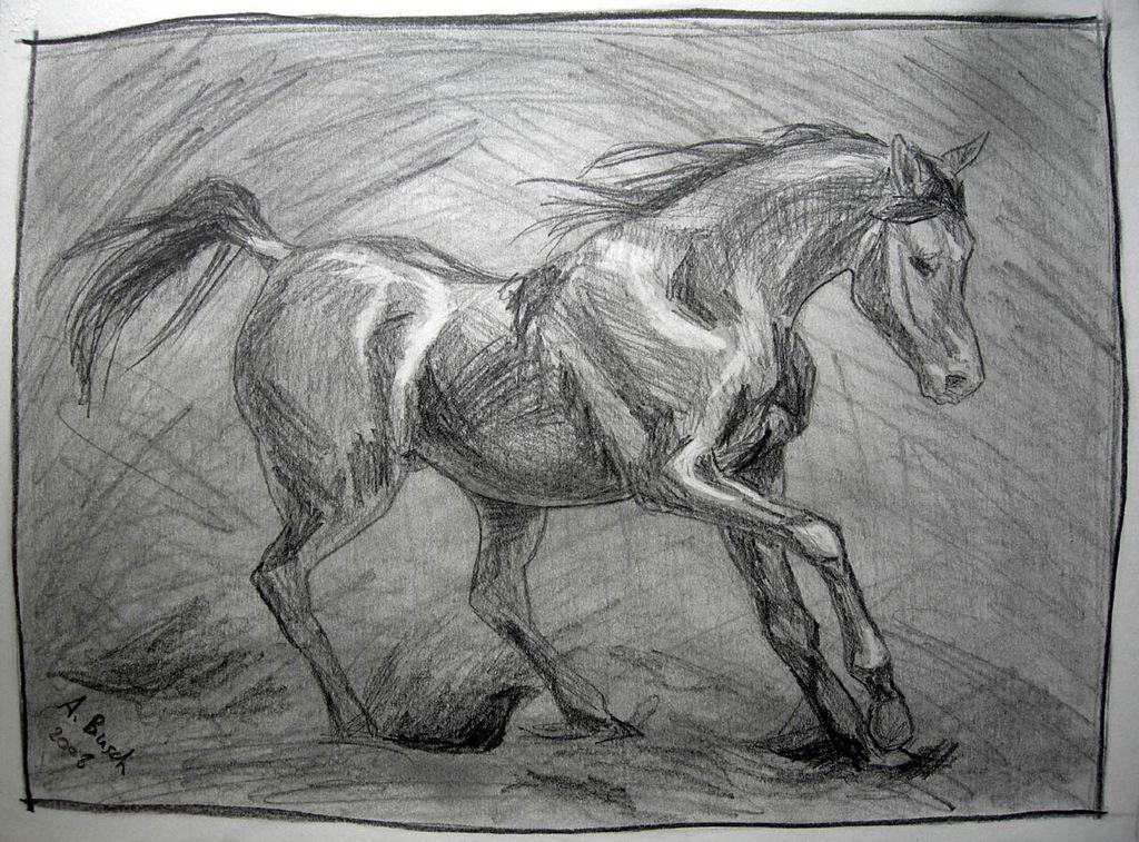 pferdekopf ausmalbilder  tippsvorlage  tippsvorlage