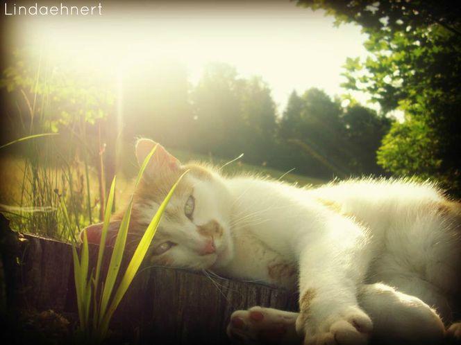 Sommer, Sonne, Katze, Fotografie, 2o12