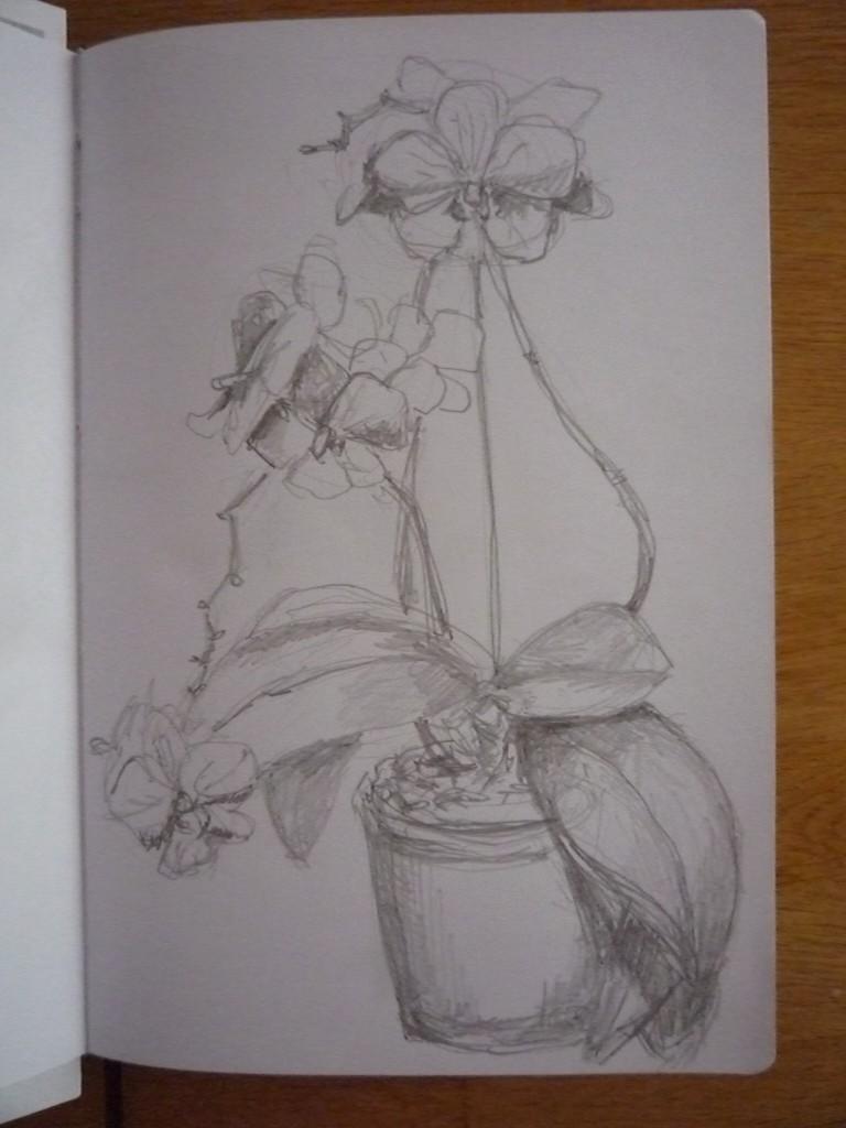Bleistiftzeichnung Blumen Zeichnung 196 Bilder Und Ideen