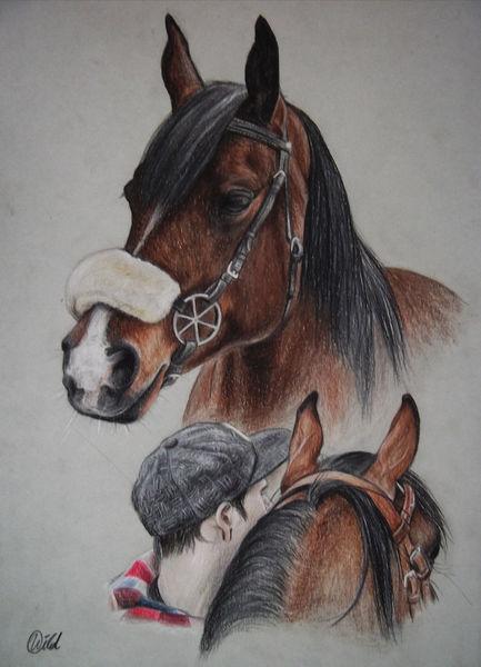 Braun, Araber, Pferde, Stute, Portrait, Tiere
