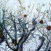 Apfel, Früchte, Der apfel, Zankapfel