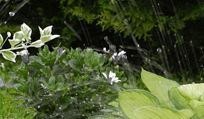 Tropfen, Natur, Pflanzen, Wasser, Regen, Fotografie