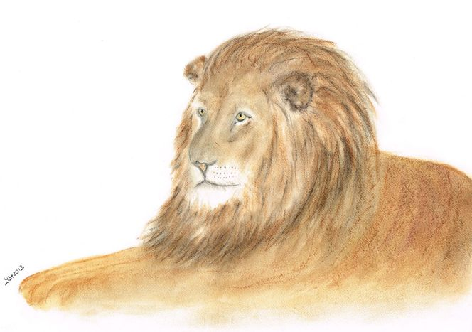 Pastellmalerei, Portrait, Augen, Löwe, Tierzeichnung, Zeichnungen