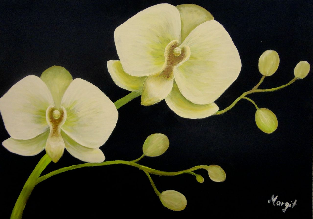 orchideen natur pflanzen orchidee malerei von witti bei kunstnet. Black Bedroom Furniture Sets. Home Design Ideas