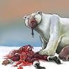 Weihnachtsmann, Eisbär, Nordpol, Illustrationen