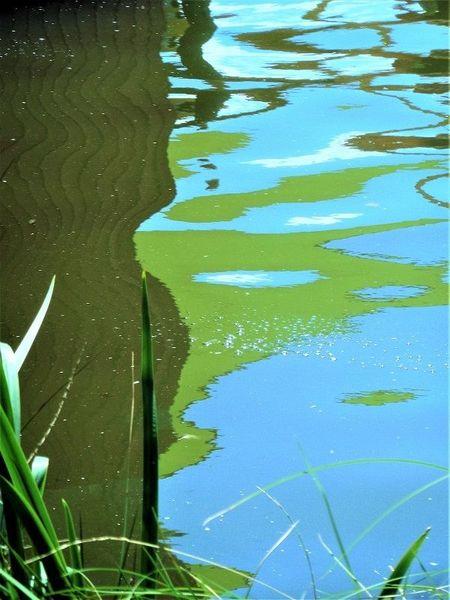 Grashalme, Wasser, Kalte farben, Spiegelung, Pflanzen, Fotografie
