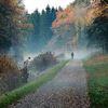Ludwigskanal, Landschaft, Herbst, Nebel