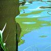 Wasser, Kalte farben, Spiegelung, Pflanzen