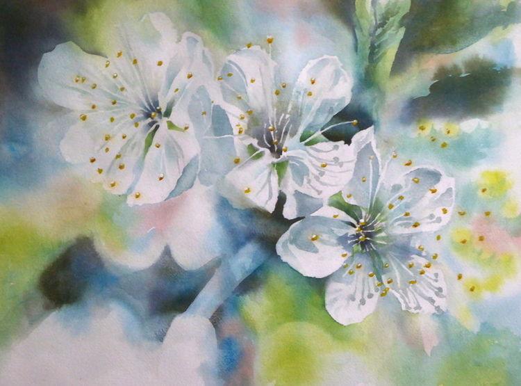 Aquarellmalerei, Kirsche, Blüte, Aquarell