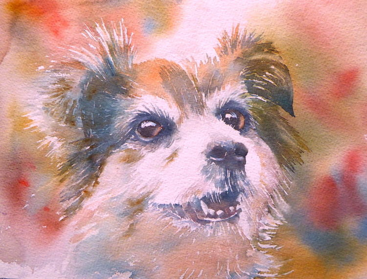 Hundeaugen, Aquarellmalerei, Aquarell tierportrait, Hund, Aquarell,