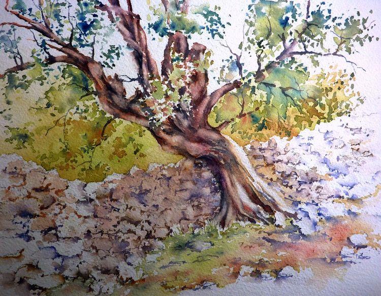 Oliv, Aquarellmalerei, Baum, Kroatien, Olivenbaum, Aquarell