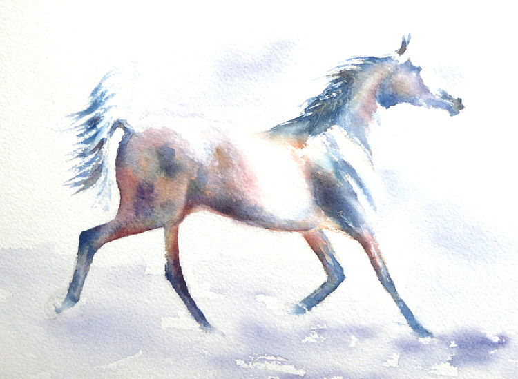 Arabian, Aquarellmalerei, Wilde mähne, Pferde, Polnisch, Gemälde