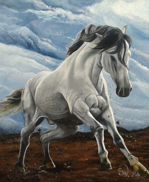 Ungestüm, Wild, Pferde, Wolken, Malerei
