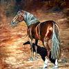 Braunes pferd, Mustang, Präriepferd, Pferd mit halfter