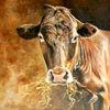 Kuh, Kuh frisst stroh, Rind, Bauernhof
