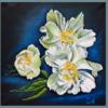 Pfingstrosen, Blüte, Stillleben, Weiße blüten