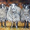 Lamm, Schafwolle, Schaf, Bauernhof