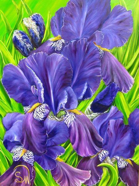 Lila, Bartiris, Wilde, Violett, Iris barbata, Lilie