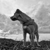 Konzept, Natur, Hund, Realität