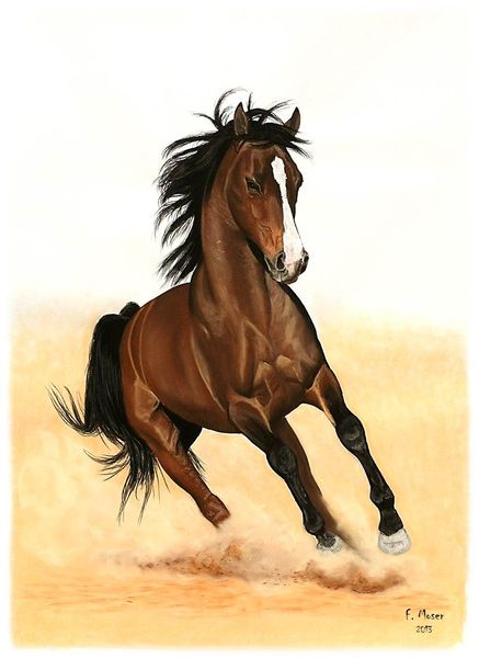 Die volle kraft pferde zeichnungen kraft von mosart bei kunstnet - Comment dessiner un cheval au galop ...