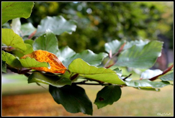 Baum, Blätter, Park, Fotografie, Pflanzen
