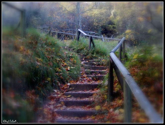 Wald, Herbst, Einsamkeit, Der weg, Fotografie, Weg