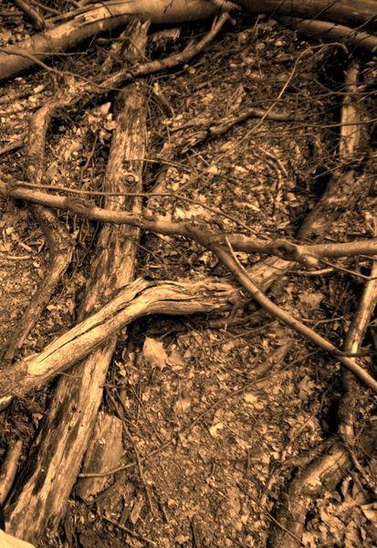 Fotografie, Wald, Projekt wald