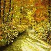 Herbstsonne, Pfälzer, Wald, Herbstlicht