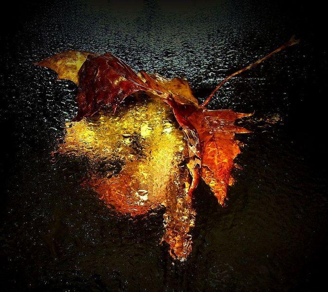Orange, Ahorn, Pflanzen, Blätter, Herbst, Ahornblatt