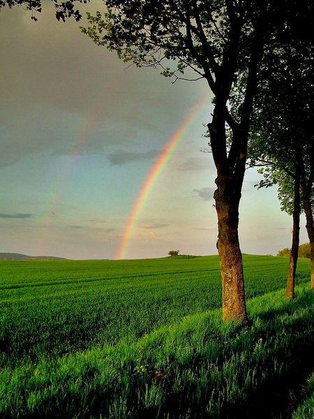 Regenbogen, Bunt, Grün, Baum, Frühling, Himmel