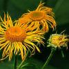 Blumen, Fotografie