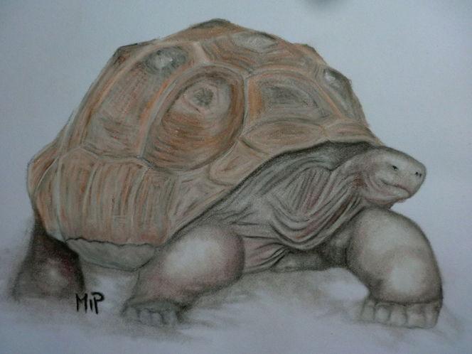 Tiere, Galapagos, Panzer, Reptil, Pastellmalerei, Schildkröte