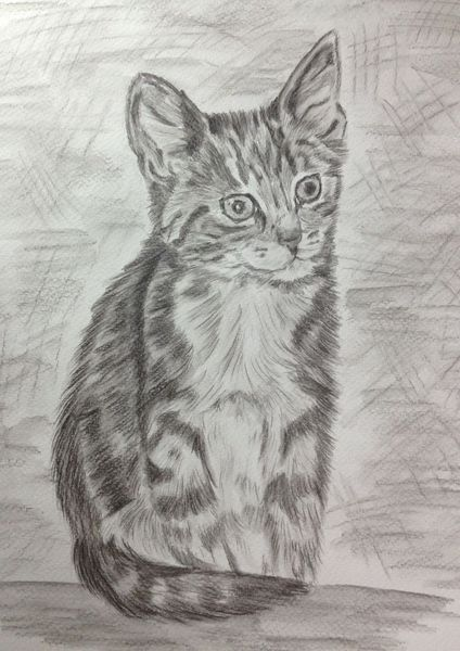 Portraitzeichnung, Katzenzeichnung, Bleistiftzeichnung, Zeichnungen, Liebling