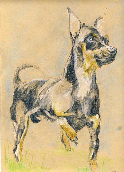 Tiere, Buntstiftzeichnung, Hund, Bleistiftzeichnung, Gulliver, Mischtechnik