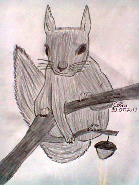 Zeichnungen, Eichhörnchen
