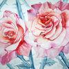 Blumen, Rose, Botanik, Rosa