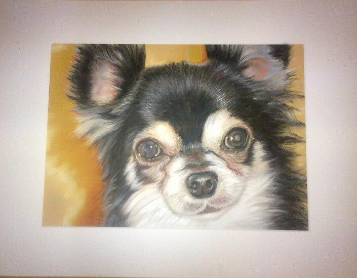 Portrait, Tiere, Hund, Pastellmalerei, Kreide, Zeichnungen