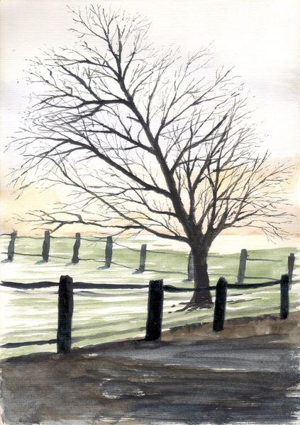 Baum, Landschaft, Koppel, Himmel, Wiese, Weg