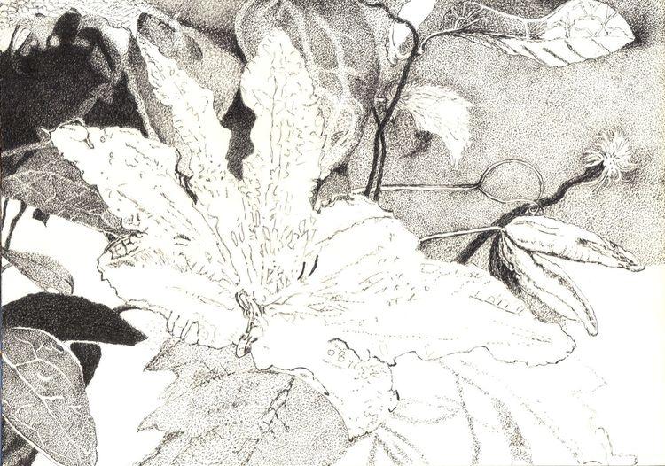 Blumen, Natur, Schwarz weiß, Blätter, Blüte, Tusche