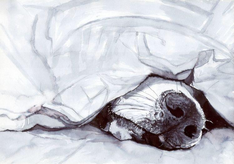 Schnauze, Decke, Schlaf, Müde, Hund, Zeichnungen