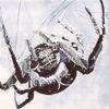 Netz, Tiere, Spinne, Krabbeln