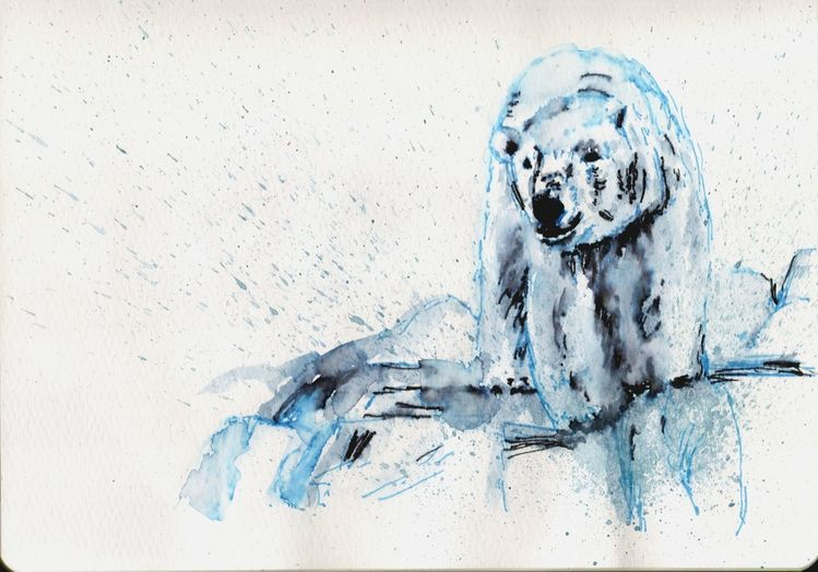 Kalt, Bär, Eisbär, Eis, Zeichnungen