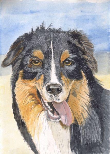 Hund, Nase, Fell, Augen, Tiere, Zunge