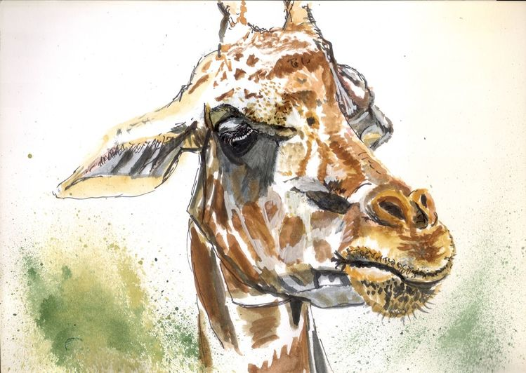 Tiere, Natur, Lebewesen, Schnauze, Giraffe, Fell