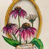 Heilpflanze, Ccopicmarker, Echinacea, Sonnenhut