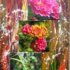 Bunt, Insekten, Makros, Garten