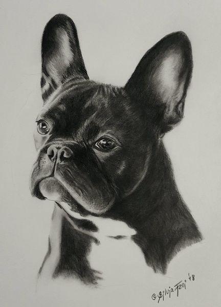 Französische bulldogge, Hund, Hundeportrait, Tierzeichnung, Zeichnung, Hundezeichnung