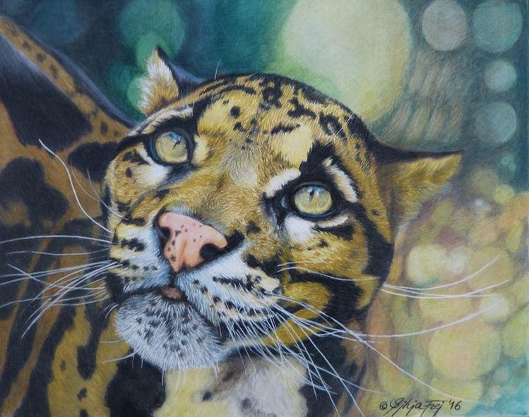 Polychromos, Katze, Raubtier, Zeichnung, Tierwelt, Buntstiftzeichnung